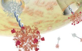 Анализ крови на онкомаркер са 125: для чего применяется, как сдается, расшифровка и показатели нормы