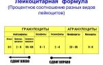 Повышены сегментоядерные нейтрофилы у взрослого: причины, норма общего анализа, терапия