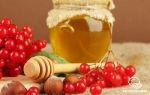 Калина при варикозе польза и вред, как приготовить, мыть ягоды или нет