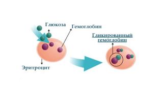 Норма гемоглобина в крови у женщин при беременности: таблица