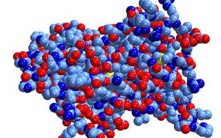 Пролактин: норма у женщин и мужчин, изменение показателей гормона в анализе крови