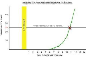 ХГЧ: расшифровка показателей анализа крови на определение уровня хорионического гонадотропина человека