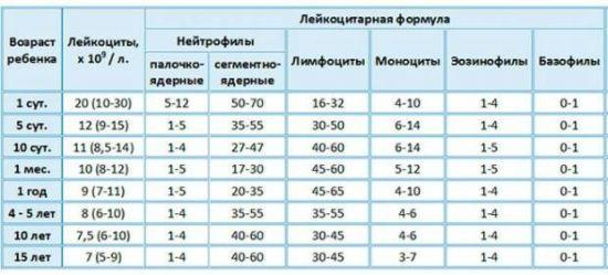 Норма лейкоцитов в крови у детей: уровень по возрасту, объяснение содержания таблицы