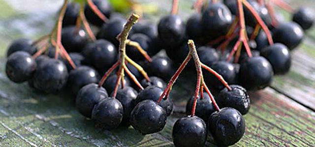 Какие ягоды снижают артериальное давление в домашних условиях