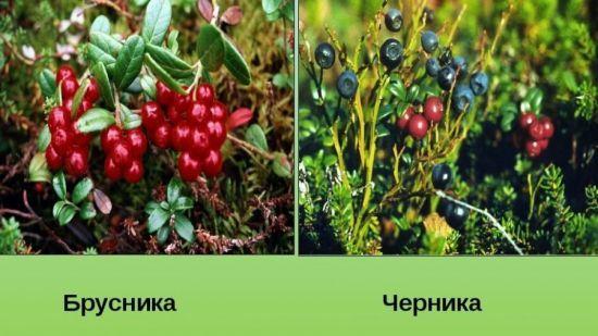 Какие травы понижают сахар в крови при сахарном диабете