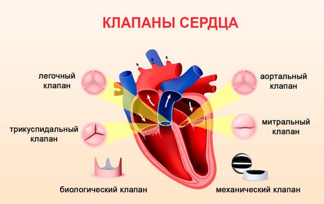 Болезни сердца: причины и симптомы заболеваний, список и названия в области медицины