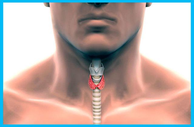 Тиреотропный гормон: нормы для женщин и мужчин, причины повышения в крови, симптомы высокого и низкого уровня