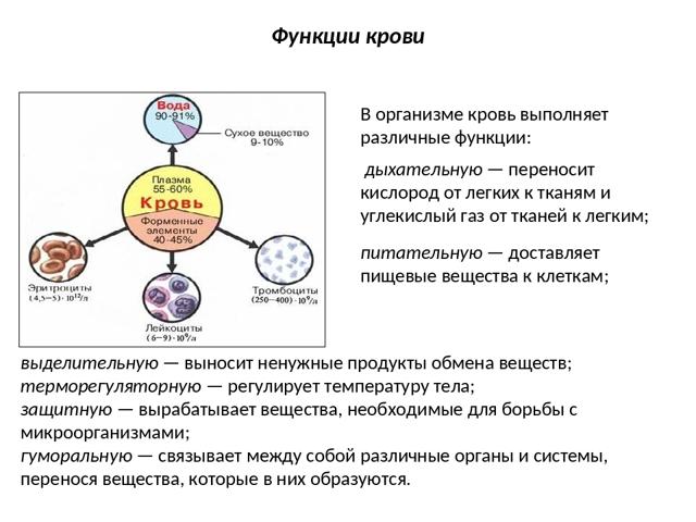 Где образуются тромбоциты и где разрушаются: что это за процесс