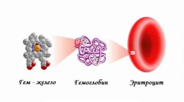 Что такое гемоглобин в крови: за что отвечает, причины отклонений