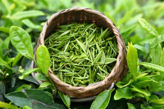 Снижает ли зеленый чай сахар в крови, польза и вред, отзывы