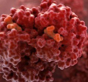 Эритроцитоз: причины абсолютной, относительной и физиологической формы заболевания, симптомы и лечение