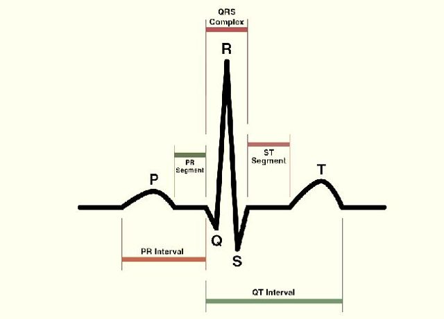 Кардиография сердца: что это такое, как делать, противопоказания, расшифровка результатов