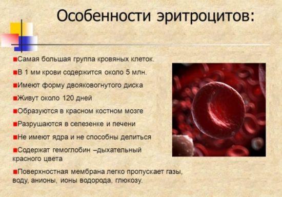 Эритроциты в крови повышены: причины избытка красных кровяных телец, симптомы и последствия, методы лечения