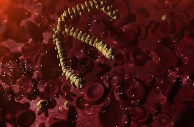 Триглицериды: виды и функции, показатели нормы и трактовка биохимии, причины высокого и низкого уровня ТГ