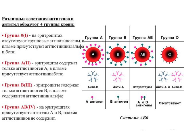 Группа крови от родителей к ребёнку: таблица сочетания генов отца и матери, вариации наследования