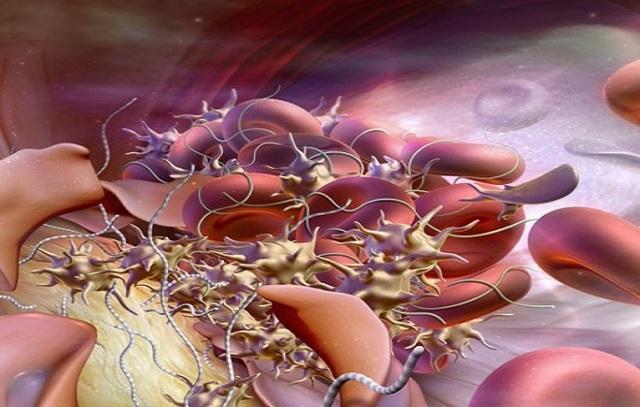 ПТИ анализ и его расшифровка: норма протромбинового индекса в крови
