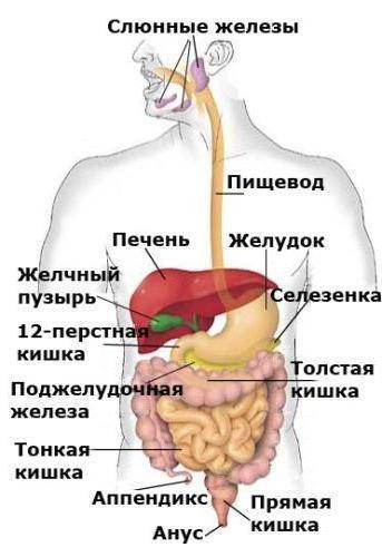 СА 19 9 онкомаркер: особенности, расшифровка, норма у женщин, что определяет