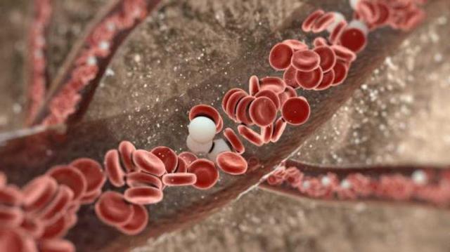 Продолжительность жизни эритроцитов человека: где образуются