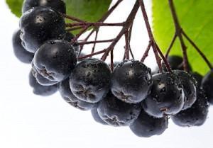 Черноплодная рябина от давления: как влияет на показатели, повышает или понижает давление, лечебные свойства, польза и вред, рецепты