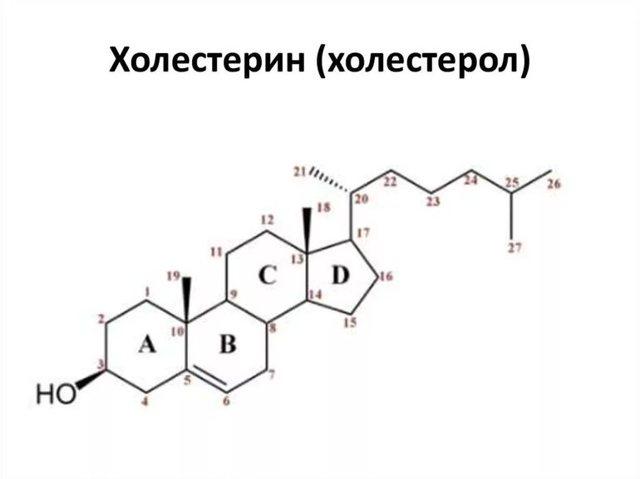 Анализ состава крови на холестерин: норма холестерола в организме и причины отклонений