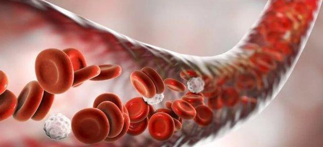 Где образуются эритроциты у человека: как называется процесс их образования