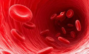 Эритроциты в крови взрослых и детей: норма, причины повышения и понижения эритроцитов