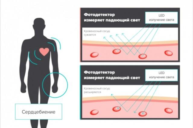 Нагрудный пульсометр: что это и как используется
