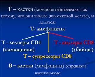 Что такое Т-лимфоциты и их функции: норма, причины почему повышены и понижены