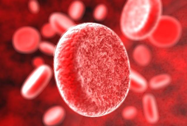 Сыворотка крови человека: что это такое, функции, отличие от плазмы, как ее получить