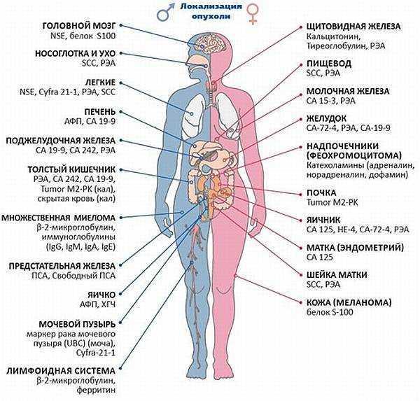 Анализ на раковые клетки в организме: онкомаркеры, как сдавать, нормы