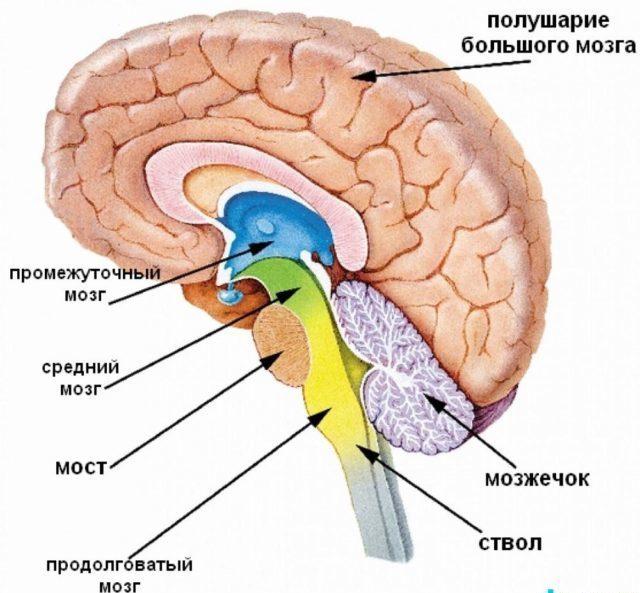 Церебральная ангиодистония сосудов головного мозга: что это такое, причины и симптомы, диагностика, лечение и профилактика