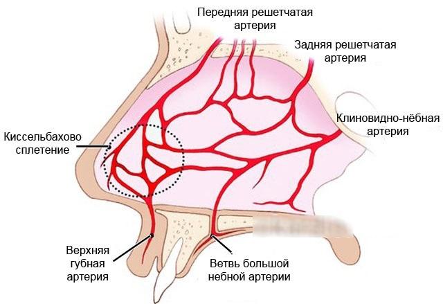 Как остановить кровь из носа: способы прекращения обильного носового кровотечения в домашних условиях