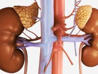 Повышенный гемоглобин: причины и симптомы у мужчин и женщин, диагностика и лечение, народные средства