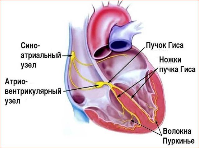 Синдром слабости синусового узла (СССУ): признаки, первые симптомы, диагностика, лечение и прогноз