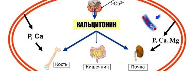 Кальцитонин: норма гормона щитовидной железы у женщин и мужчин, причины отклонения, терапевтические методы