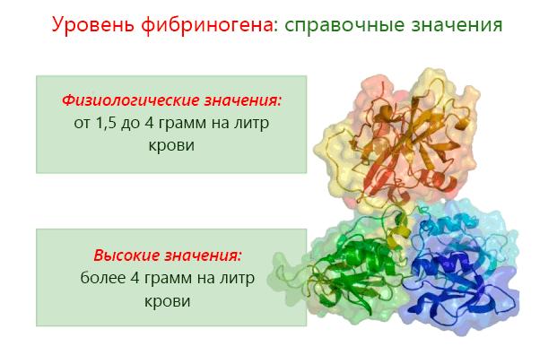 Фибриноген: норма в крови, функции в организме, причины и симптомы повышения и понижения