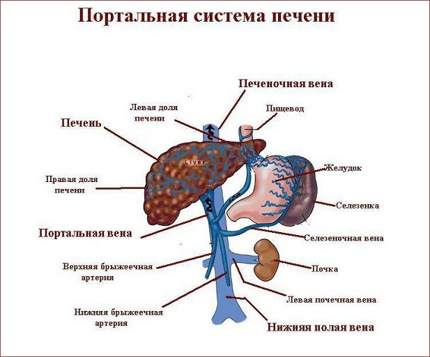 Синдром и болезнь Бадда-Киари: чем отличаются, причины, симптомы, диагностика и лечение