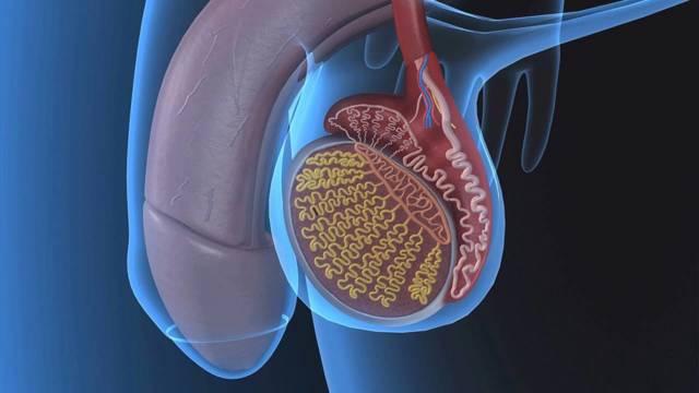 Варикоцеле яичка: что это такое, симптомы и лечение без операции у мужчин