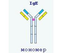 Анализ крови на иммуноглобулин Е у человека: что показывает, как сдавать, расшифровка