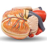 Профессии, повышающие риск развития сердечных заболеваний