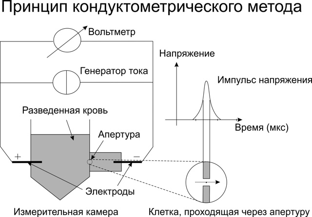 Клетки крови под микроскопом: фото с описанием, таблица
