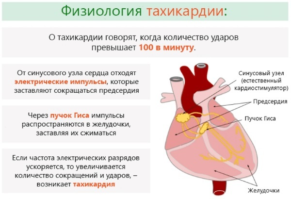 Креатинкиназа (КФК): что это, норма, причины повышения и понижения, расшифровка анализа, лечение