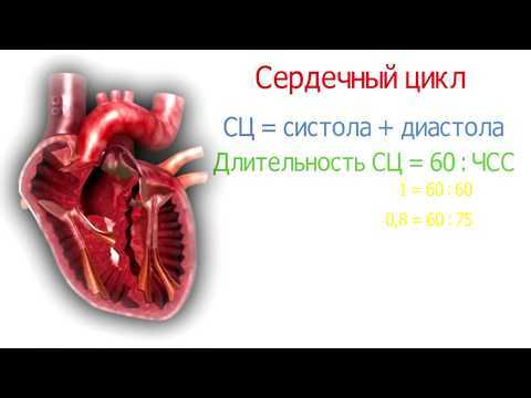 Систола: продолжительность расслабления предсердий и желудочков, что происходит при сокращении сердца