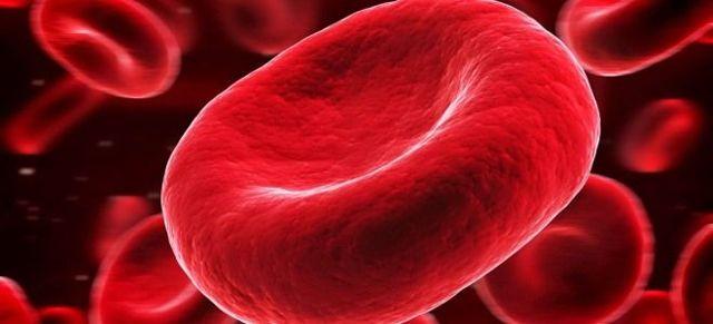 Эритроциты в крови человека: строение, функции, количество