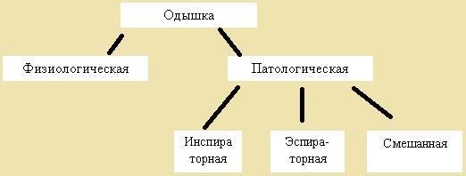 Одышка: причины возникновения и признаки, разновидности, что делать при появлении приступов