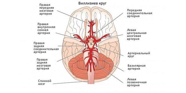 Дуплексное сканирование брахиоцефальных артерий и сосудов: что это такое, расшифровка, норма