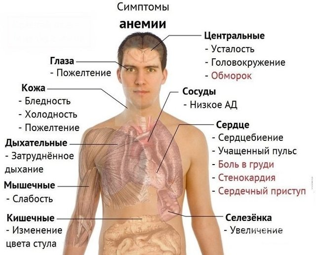 mcv в анализе крови: что это такое, нормы, причины отклонений, расшифровка