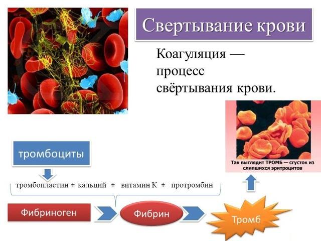 Как происходит свертывание крови: время и факторы свёртывания
