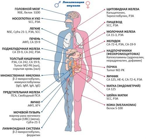 СОЭ при онкологии: сколько норма, какой показатель