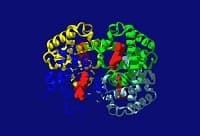 Что такое фетальный гемоглобин: у детей и взрослых, функции, физиологическое значение